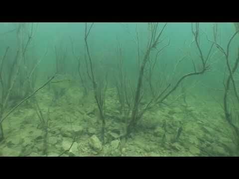 Fishing Fluorocarbon Line In Clear-Water Brush - Hook N' Look Splash #25
