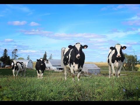 """05 - May """"Dairy Farming"""""""