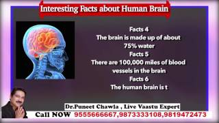 How Does Your Brain Work? Interesting Facts about Human Brain