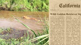 """WILD GOLDEN RETRIEVER"" SPECIES UNCOVERED BY SCIENTISTS"