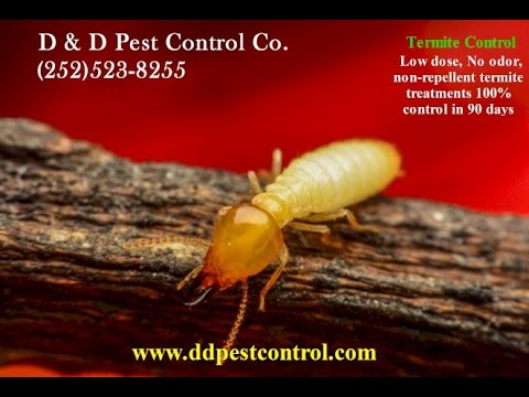 Termidor Termite Treatment - Kinston | Greenville | Jacksonville | NC
