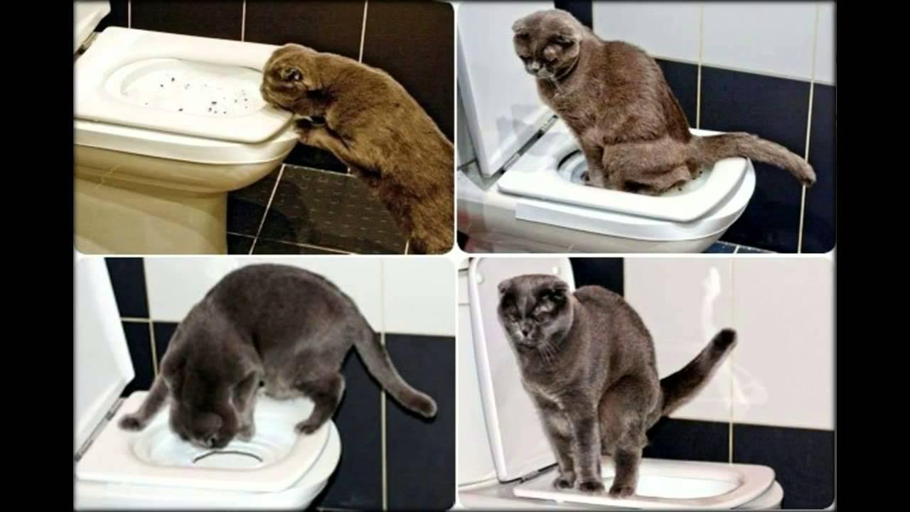 Туалет для кошек является базовым предметом для любого владельца кошек. В этом разделе вы найдете специальные модели туалетов для кошек, а именно закрытые туалеты. Многие кошки любят подобные туалеты, так как чувствуют себя более защищенными.