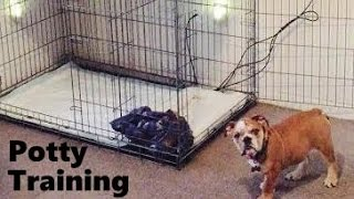 How to Potty Train an English Bulldog with the Puppy Apartment - Training English Bulldog Puppies