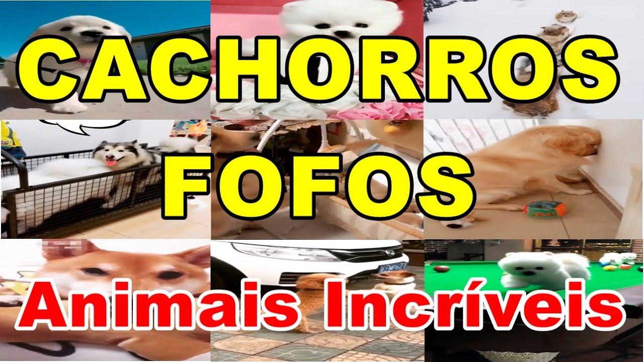 CACHORROS FOFOS – ANIMAIS INCRÍVEIS