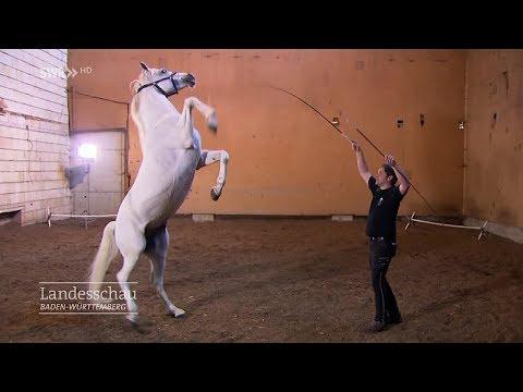 Zirkusdirektor und Pferdetrainer