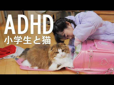 【ご報告】ADHD(発達障害)の9歳の娘ともふ猫のこと