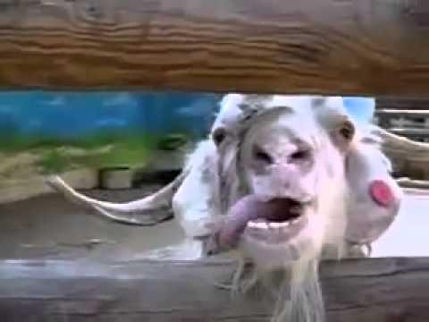 Un Animale Fa La Linguaccia Haha Bellissimo Youtube