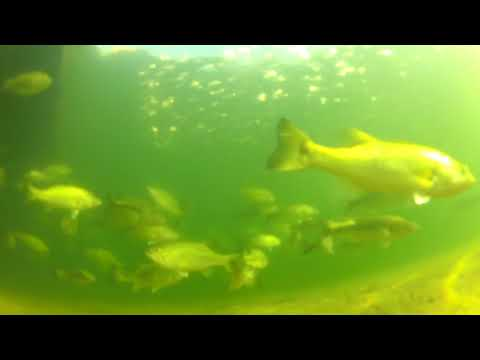 there are no bass in Castaic Lake. GoPro underwater
