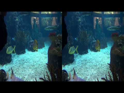 Zoo Aquarium Berlin 3D SBS 4K