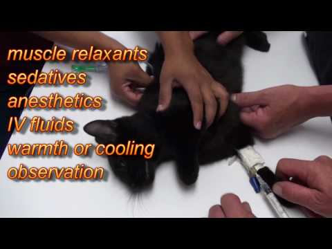 Advantix for  Dogs Mistakenly Applied to Cat