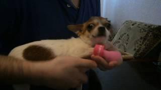 Vlog Распаковка посылки из Китая. Резиновая обувь - сапоги для маленькой собаки чихуахуа или щенка