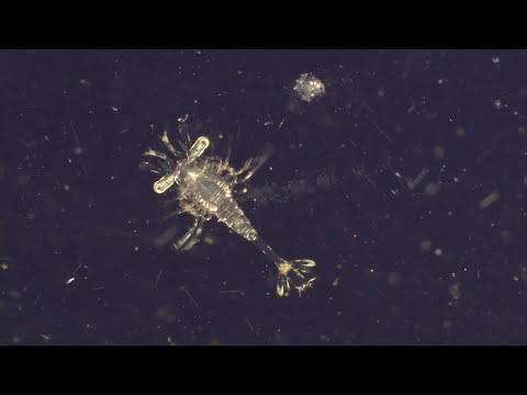 Plankton. The Most Vital Organisms On Earth | World Oceans Day | BBC Earth