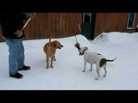 Flirt pole fun with Ava and Keela