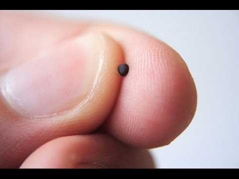The Mustard Seed or The Secret Working of the Kingdom of God