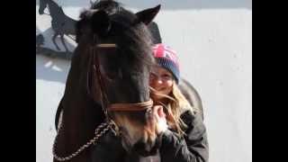 Freundschaft zwischen Mensch & Pferd ♥