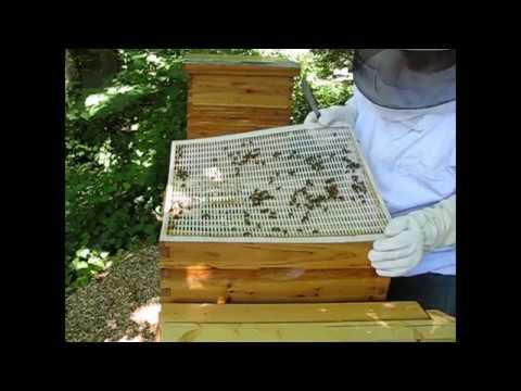 Replacing bottom board in bee hive