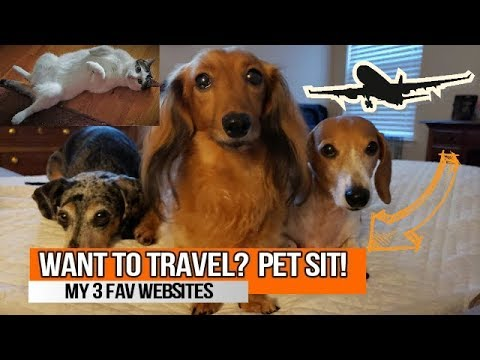 How I Find Sits On The Road // Top 3 Pet Sitting Sites