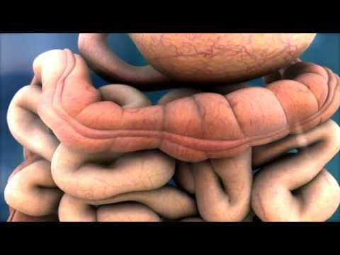 3d medical animation peristalsis in large intestine bowel abp
