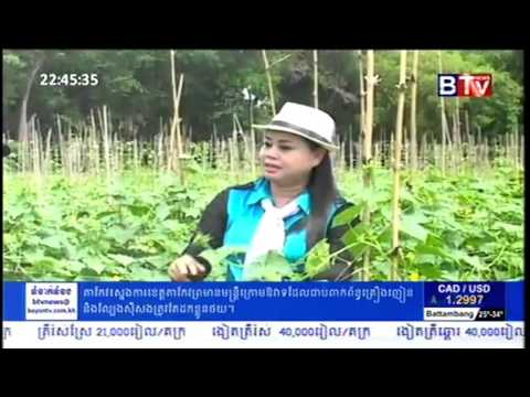Cambodia Agriculture News   Cucumber Farming in Cambodia, Part 3   YouTube