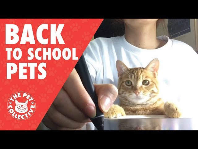 Too Cool For School: Back to School Pets 2017