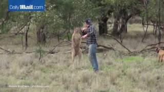 Австралиец ударил по лицу кенгуру, душившего его собаку
