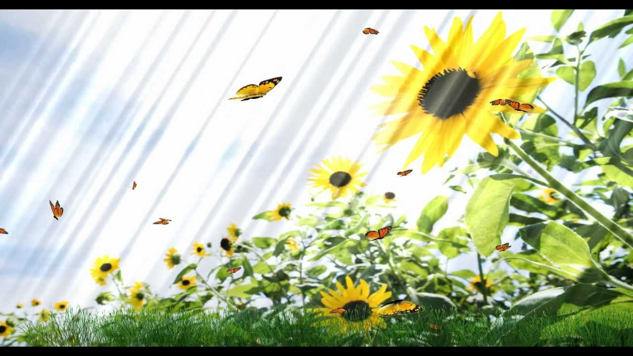 Beautiful Butterfly Animated Wallpaper Desktopanimated