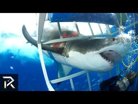 10 TERRRIFYING Shark Encounters Caught On Tape