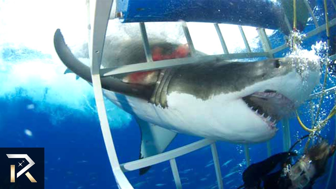 10 TERRRIFYING Shark Encounters Caught On Tape YouTube