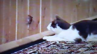 Кошка играет с мышкой)))