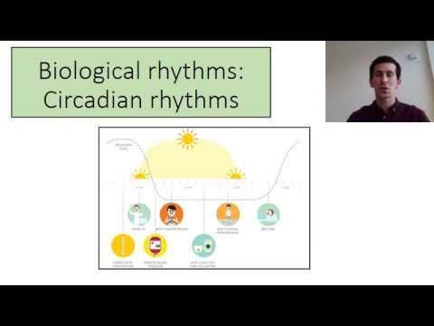 biopsychology Circadian rhythms