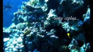 видео Поставки водоочистителей