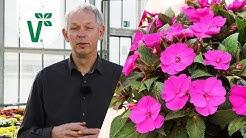 Welche Blumen für den Garten sind besonders pflegeleicht? - Volkers Gartenwissen