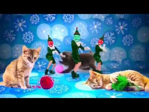 Elf Yourself Christmas Cats