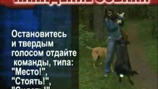 Что делать при нападении собаки(http://cianet.info/viewtopic.php?f=15&t=104 выживание, первая помощь, самооборона., 2011-02-05T07:11:28.000Z)