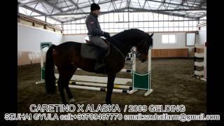 JUMPING HORSES FOR SALE-39.CARETINO X ALASKA
