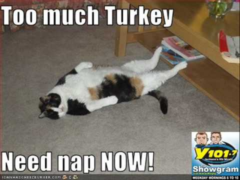 too much turkey and its showing lmfao parody youtube