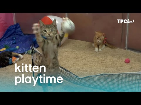 TPC Live! Kitten Playtime | The Pet Collective