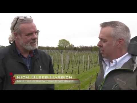 Wine About The Weather - Episode 4: North Fork Long Island