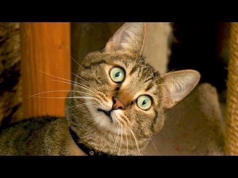 Staring At Cats