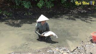 Cô Gái Miền Tây Truy Sát Cặp Cá Thác Cườm Khổng Lồ, Bắt Cặp Cá Lóc Khủng Trong Hang/NGÃ NĂM TV