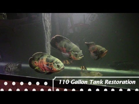 How To Restore An Aquarium