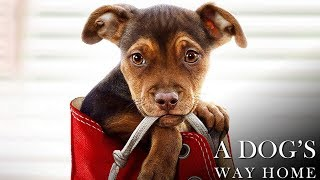A Dog's Way Home Soundtrack Tracklist - A Dogs Way Home (2019)