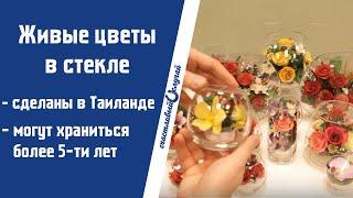 видео Бизнес: Цветы в глицерине