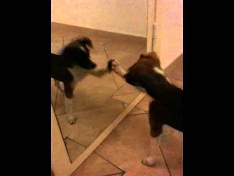 Cane tequila allo specchio youtube - Cane allo specchio ...