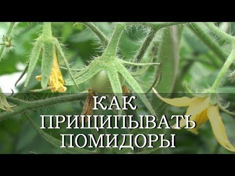 Как и когда прищипывать помидоры видео