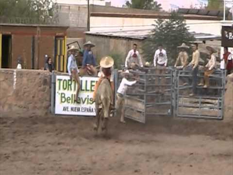 JINETEO DE TOROS CHARREADA DE LA INDEPENDENCIA 2011. CHIHUAHUA. www.caballo.tv