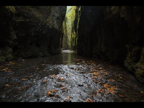 Oneonta Gorge, Oregon: 1 Hour of Nature Sounds: Nature Ambience