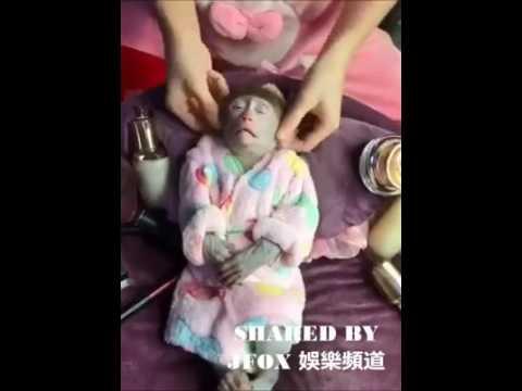 Funny GIF monkey