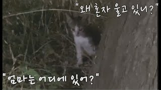 몇 시간째 풀숲에서 울고 있는 성격 까칠한 아기 고양이. A stubborn kitten who has been crying in the grass for hours.