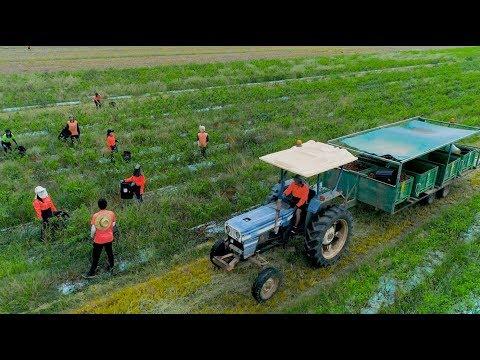 Bundaberg Agricultural Showcase